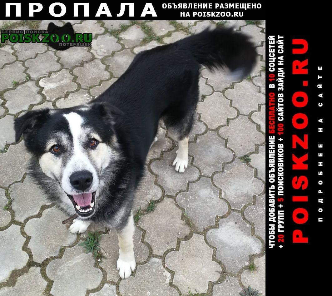 Пропала собака пес митя, вознаграждение Звенигород