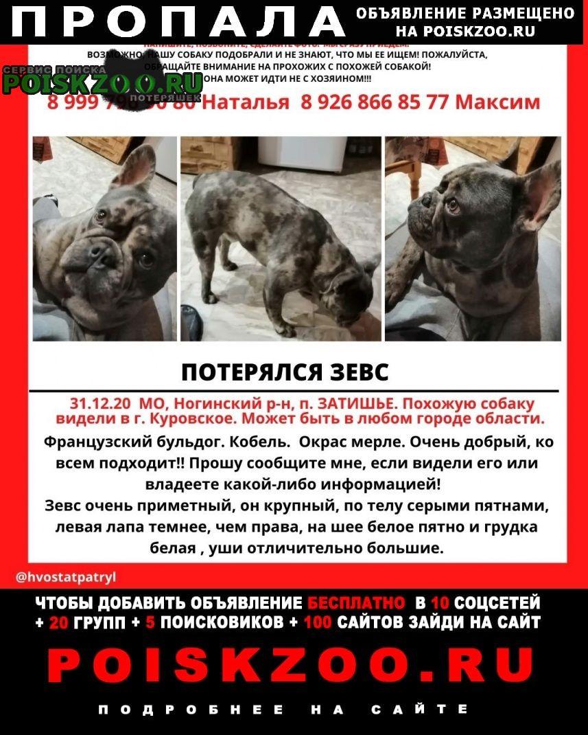 Пропала собака вознаграждение за ную собаку 30000 Ногинск
