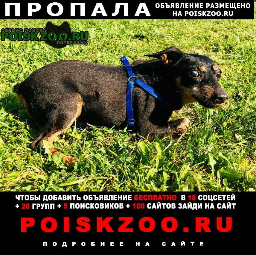 Пропала собака карликовый пинчер Москва