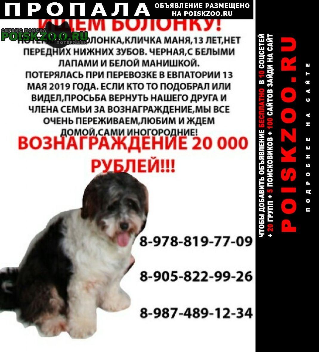 Пропала собака болонка Евпатория