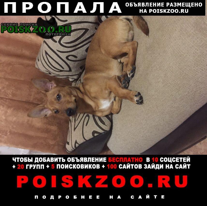 Пропала собака зовут рей последний раз видели около ам Заречный (Пензенская обл.)