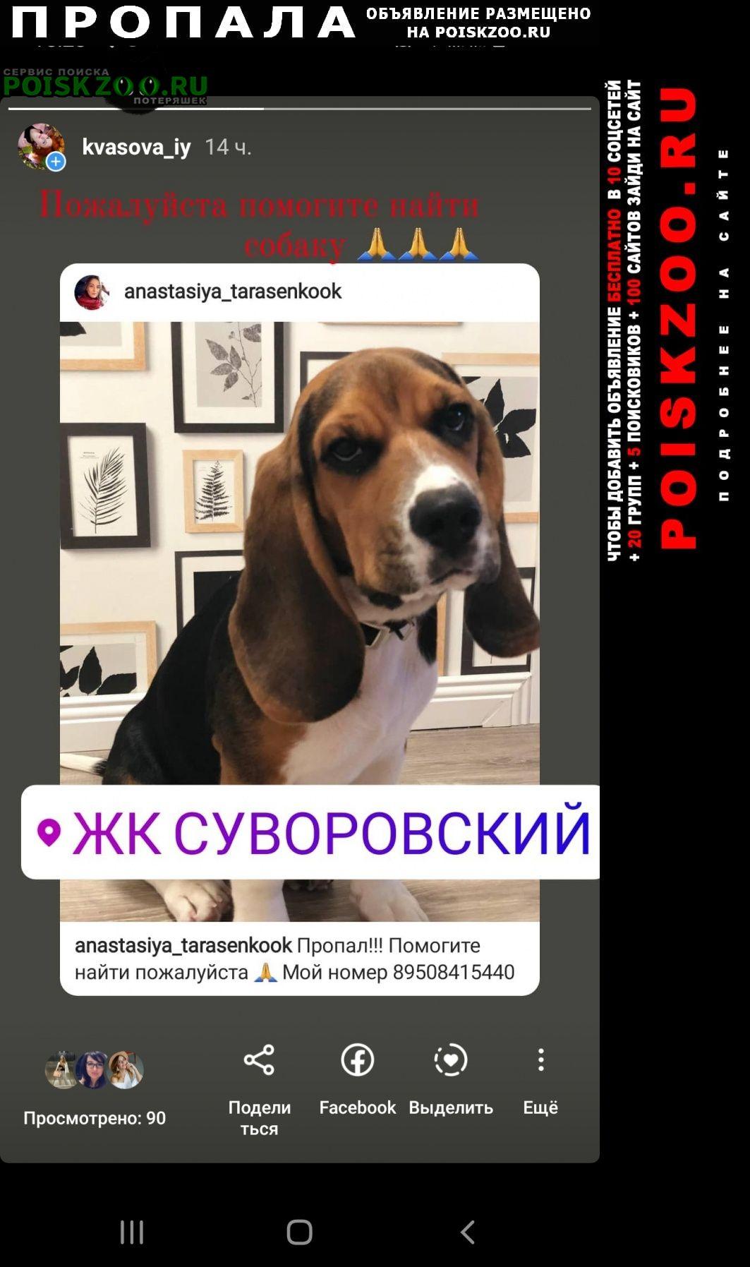 Пропала собака. Ростов-на-Дону