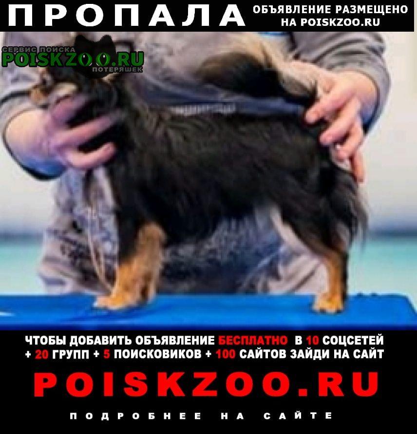 Пропала собака мальчик Пенза