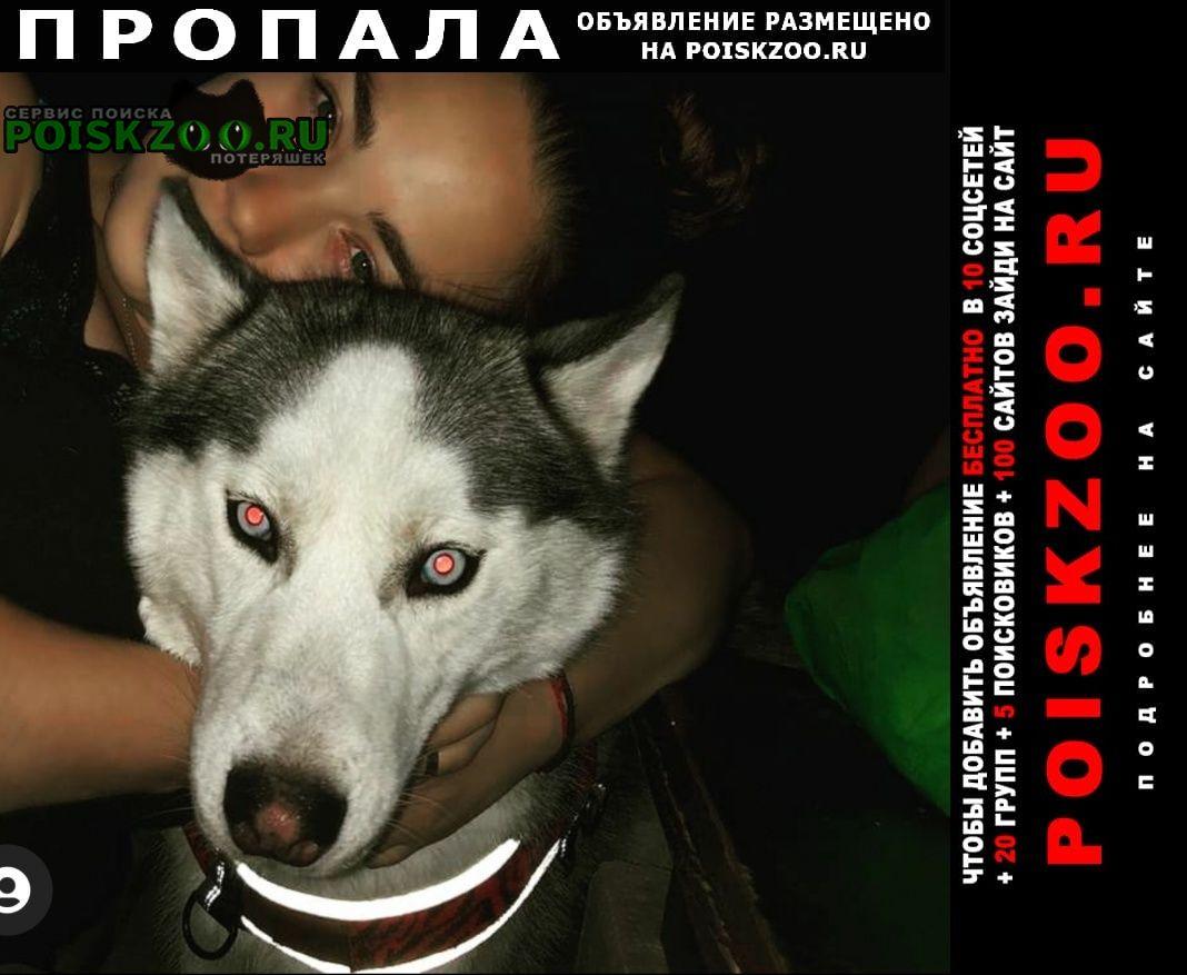 Пропала собака украдена Ессентуки