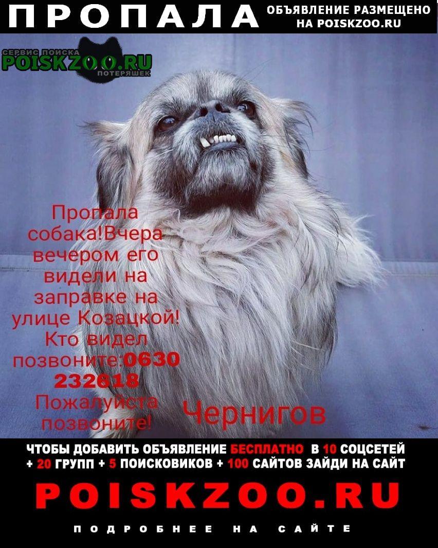 Пропала собака Чернигов