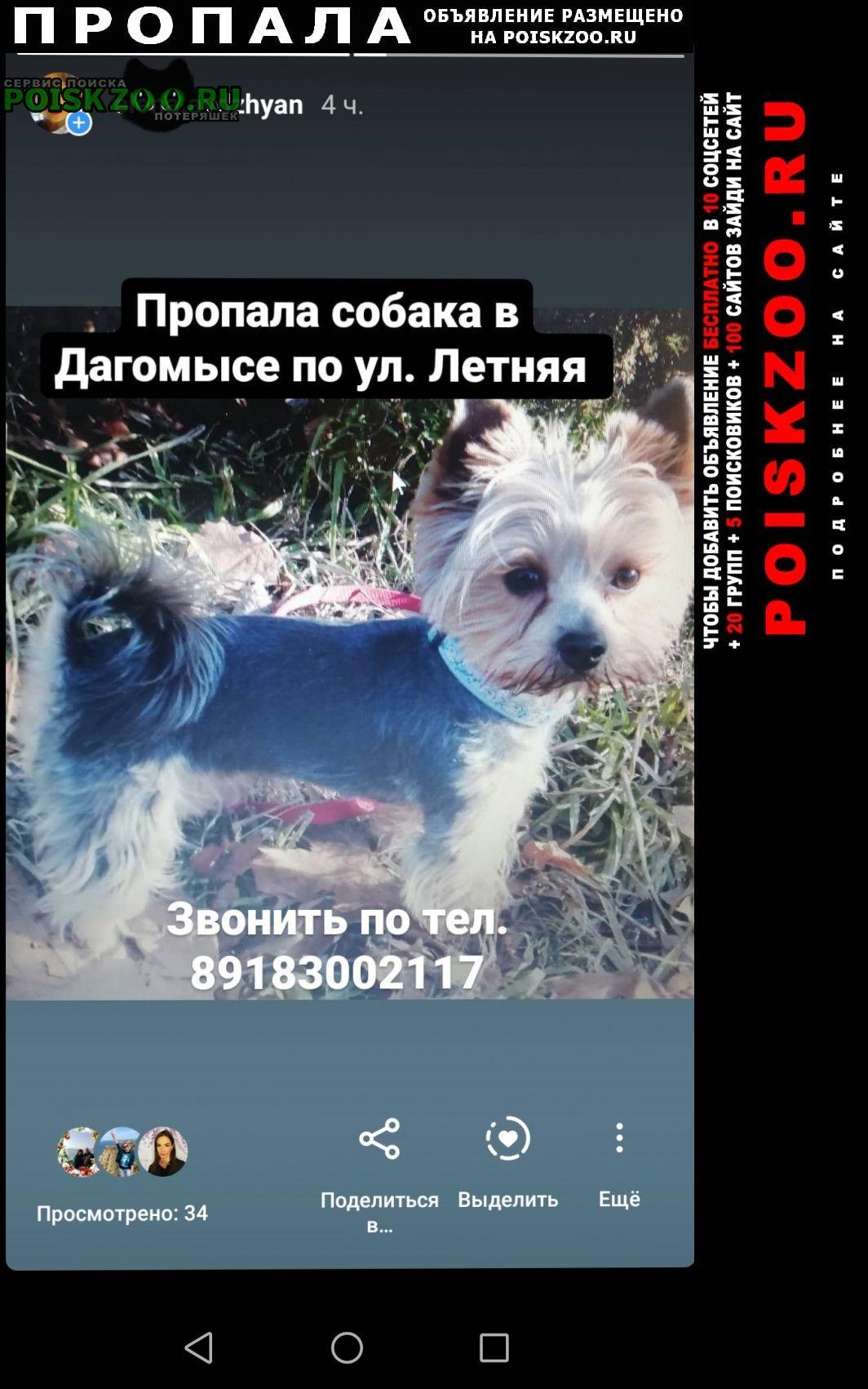 Пропала собака йорик мальчик дагомыс Сочи