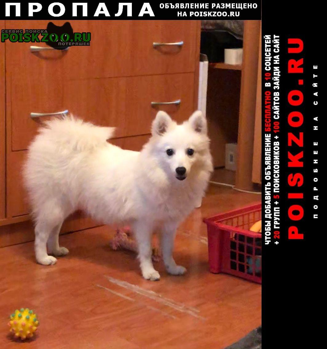 Пропала собака небольш, белая, пушистая, розовая шлейка Москва