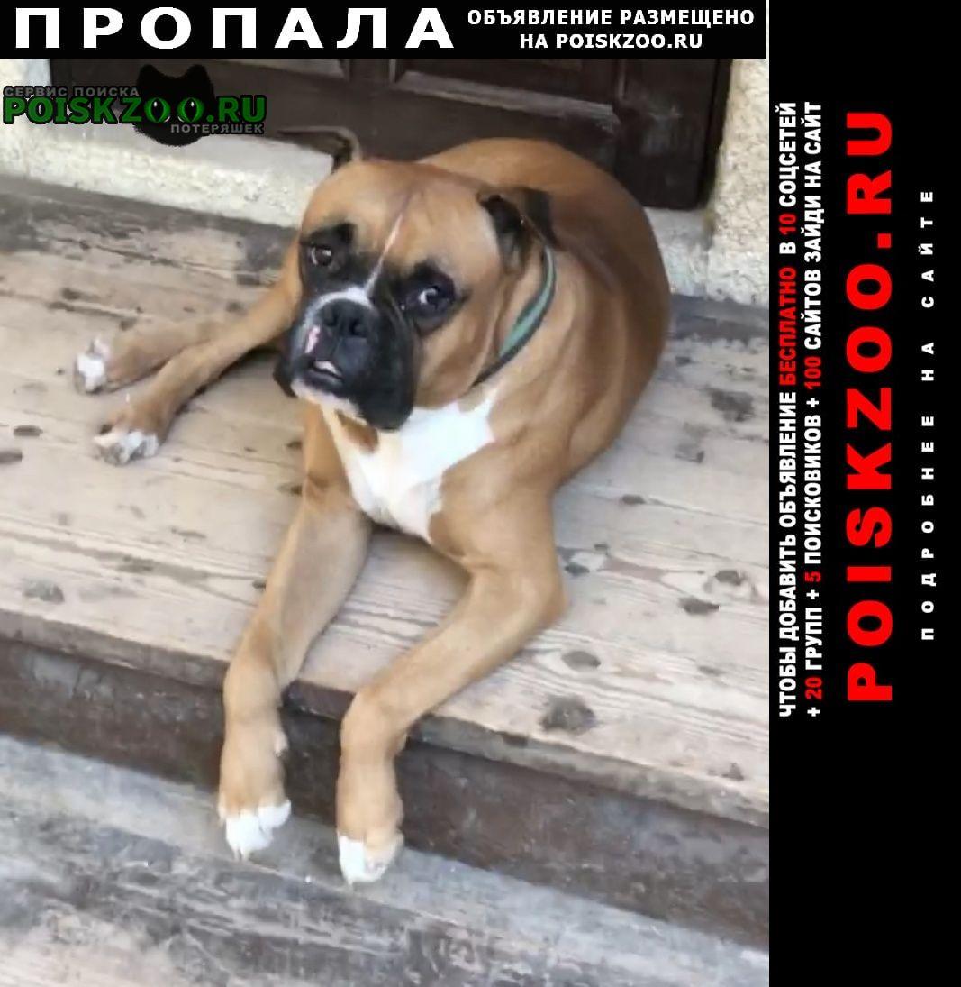 Пропала собака центральный район Сочи