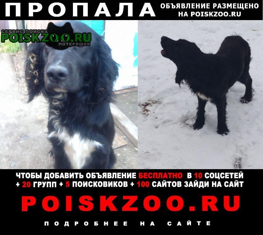 Пропала собака спаниель вязниковский район Вязники