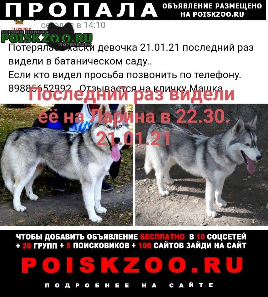 Пропала собака собачка без ошейника. в руки может не до Ростов-на-Дону