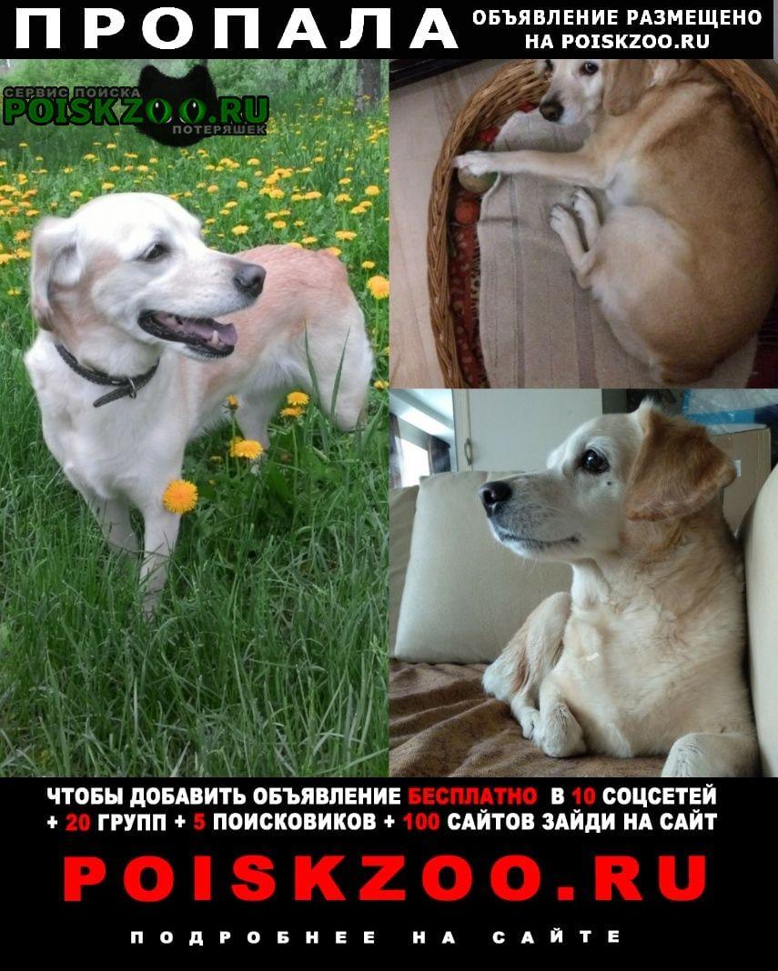 Пропала собака Стерлитамак