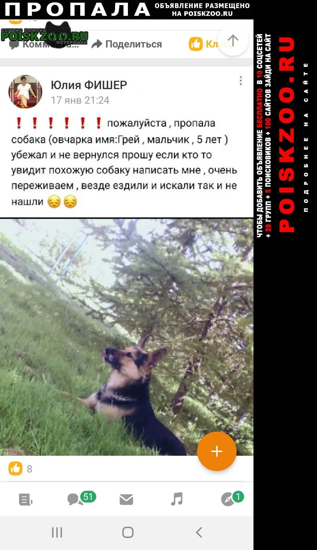 Пропала собака овчарка мальчик Подольск