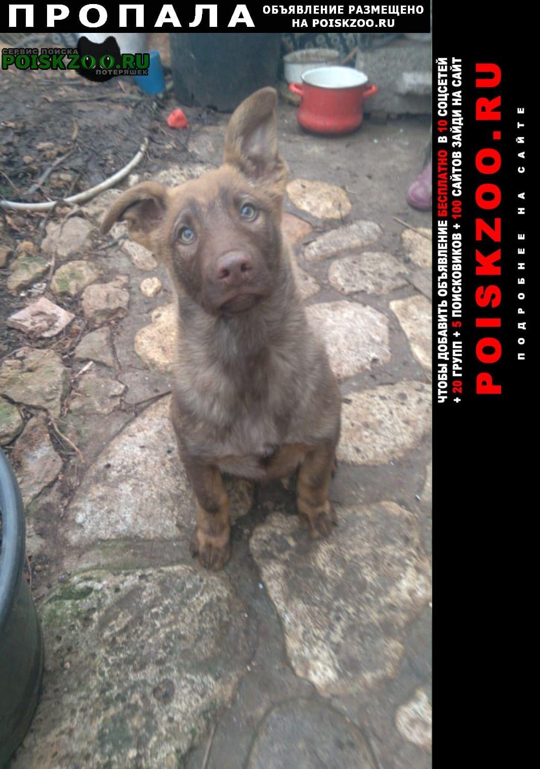 Севастополь Пропала собака щенок миша 3 мес