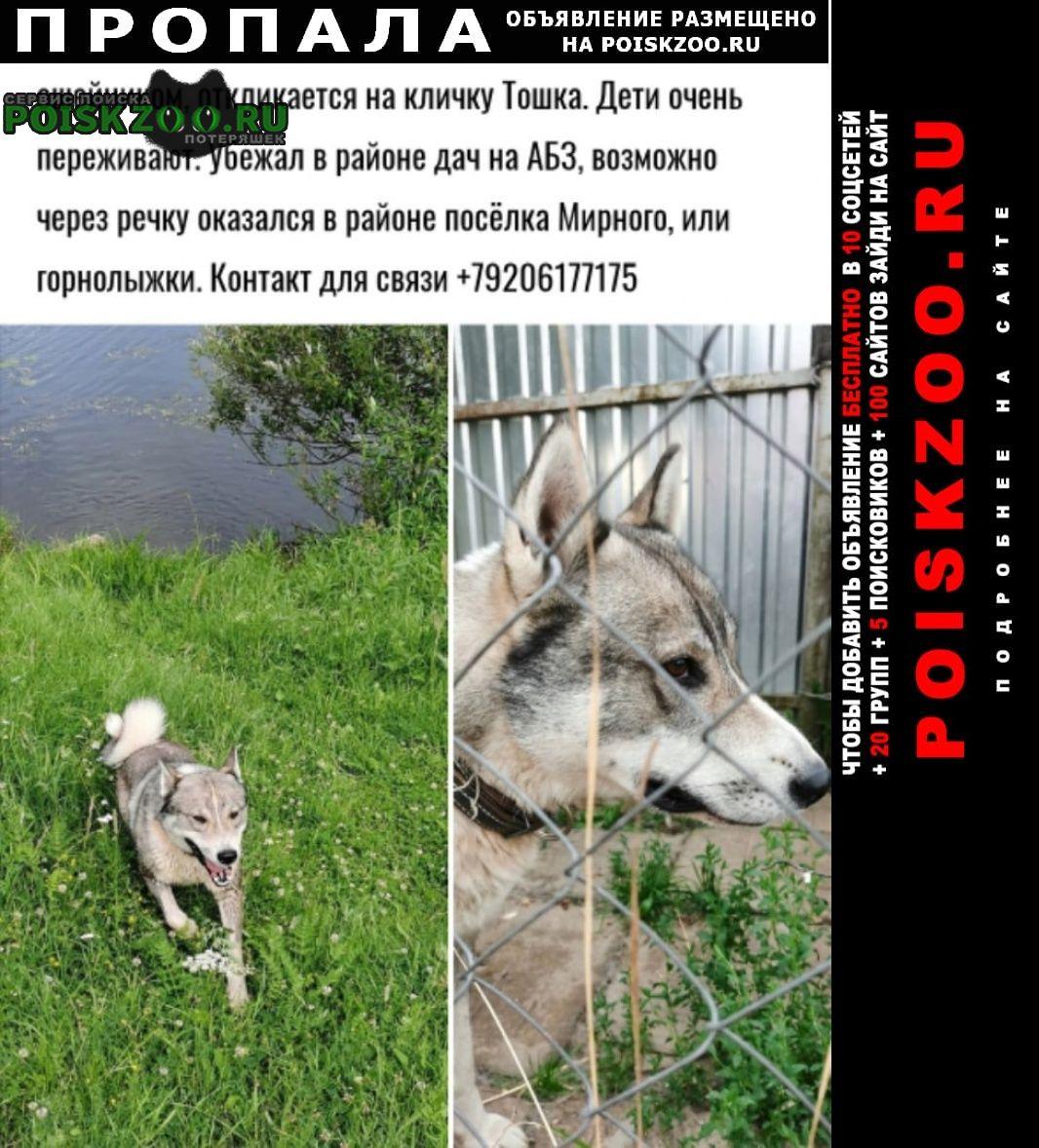 Обнинск Пропала собака