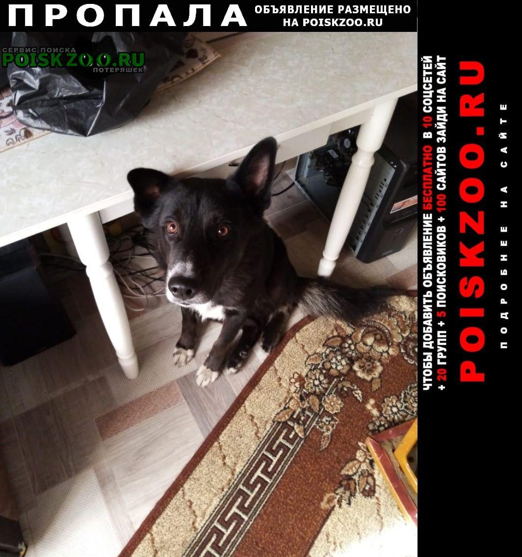 Хабаровск Пропала собака центральный район