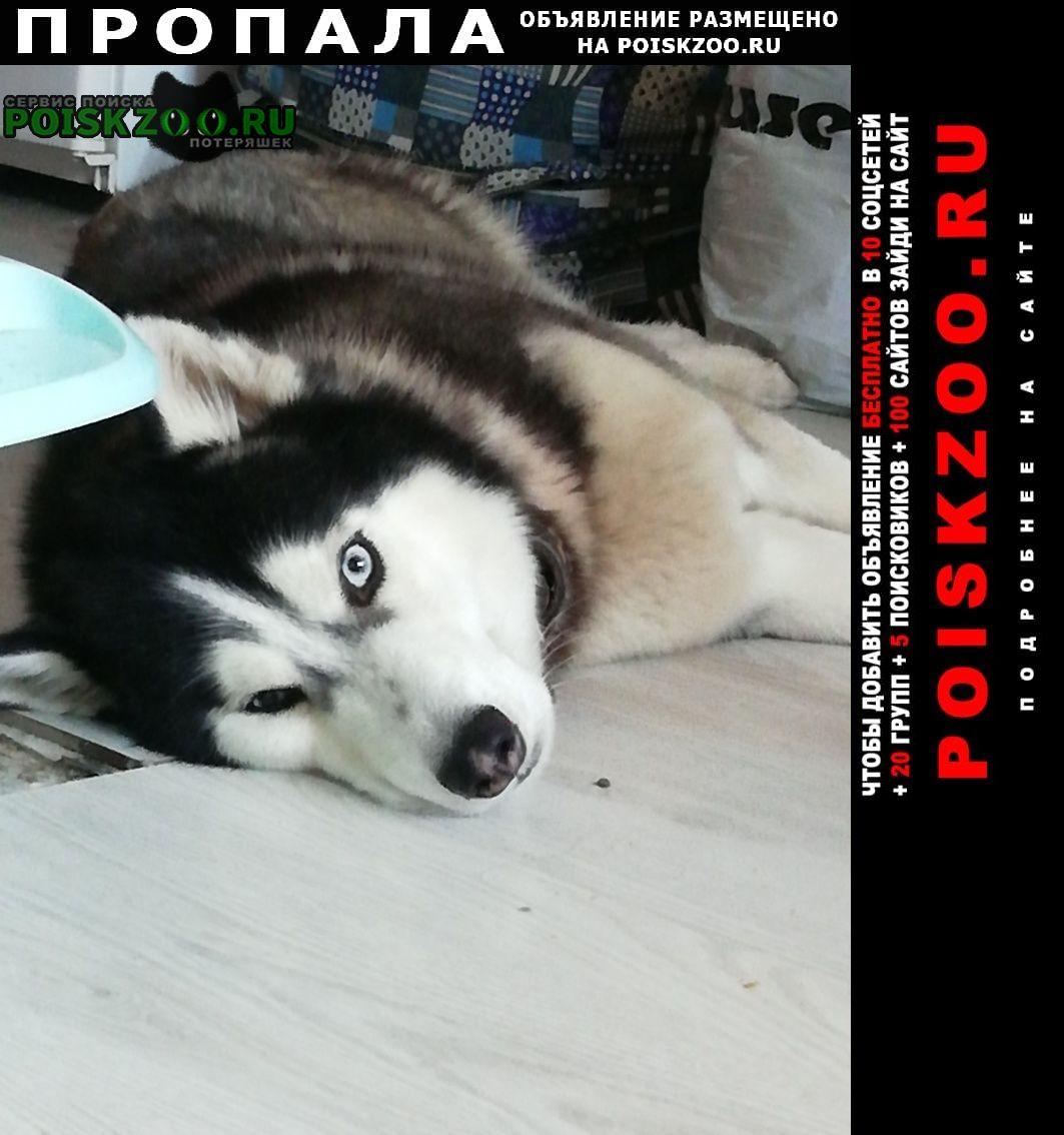 Пропала собака ачи Тюмень