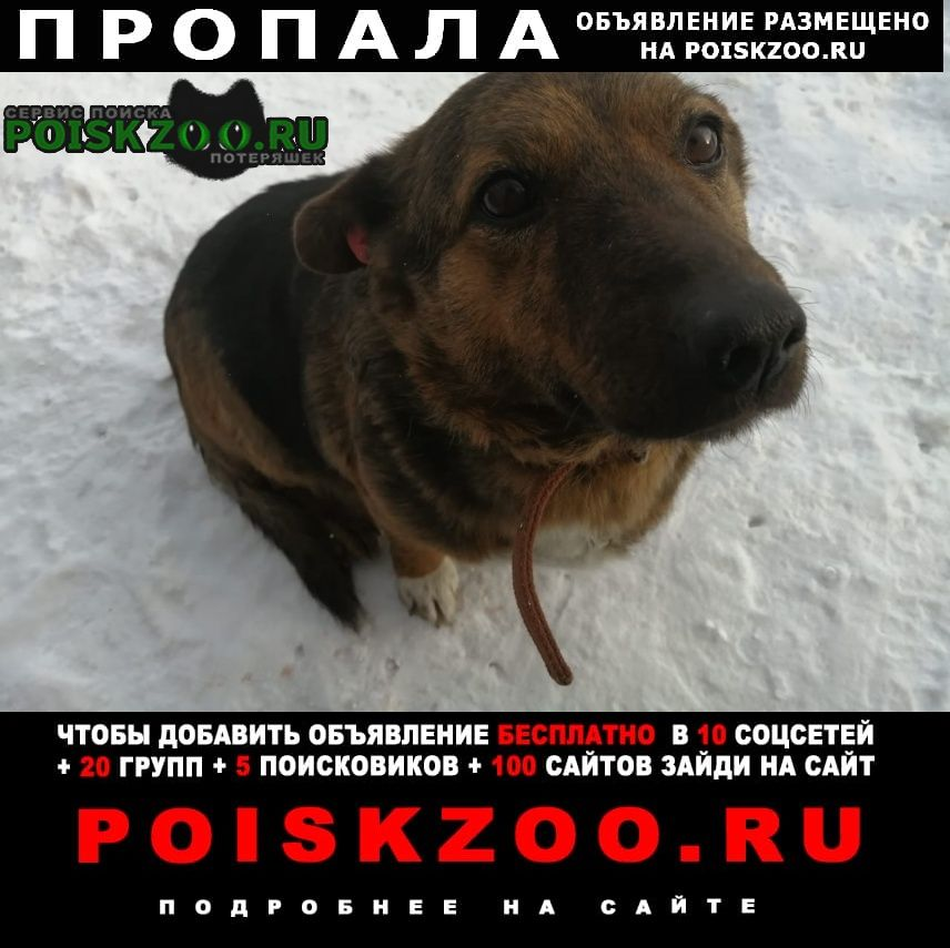 Томск Пропала собака