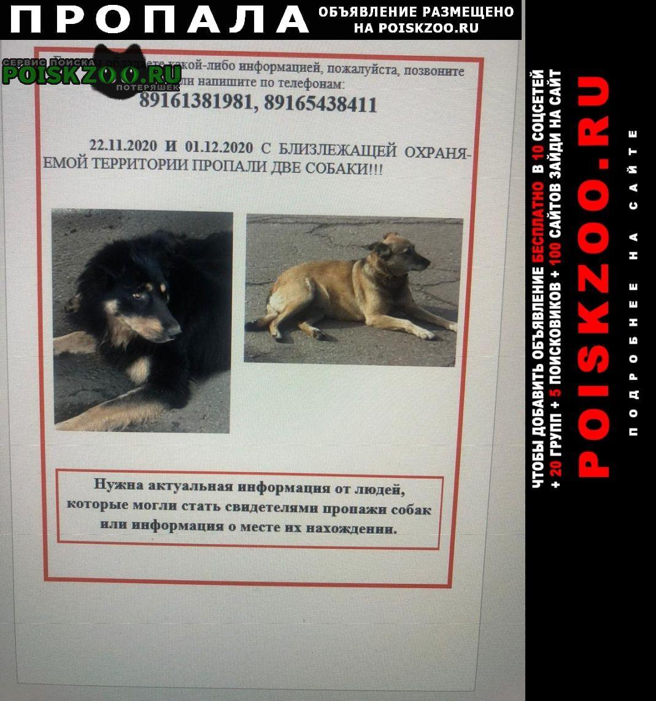 Пропала собака кобель Москва