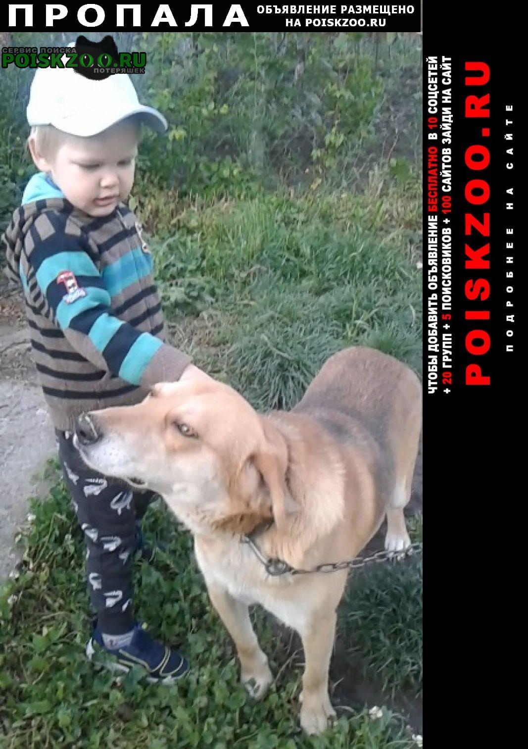 Апшеронск Пропала собака русская гончая (охотничья)