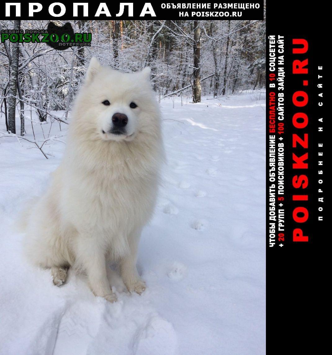 Пропала собака Александров