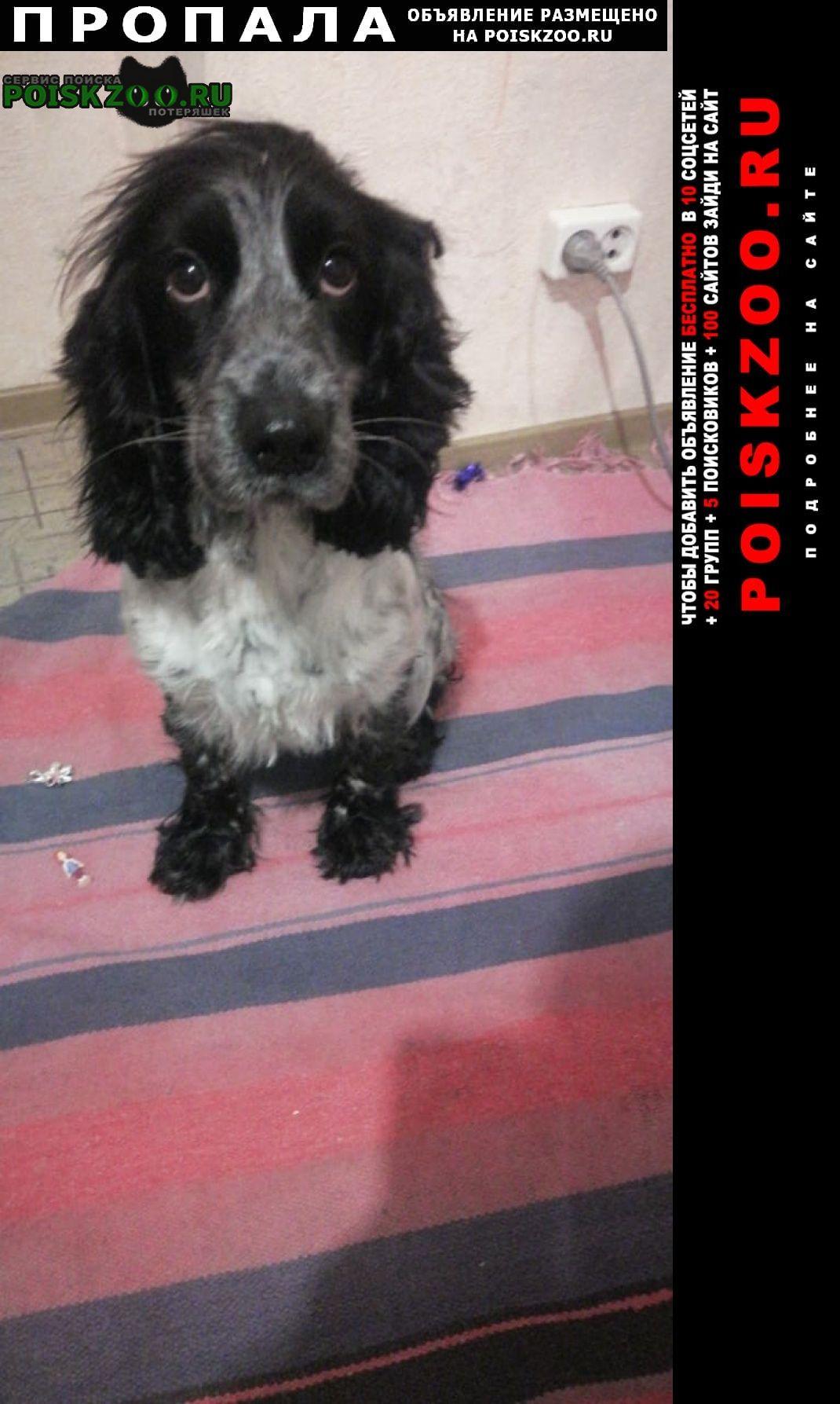 Пропала собака кличка берта Самара