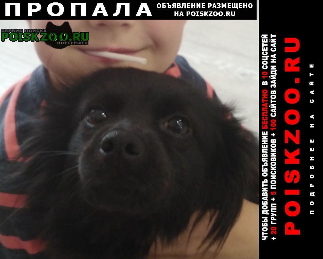 Пропала собака 25 января на юмр Краснодар