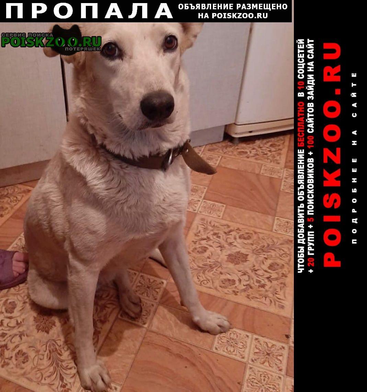 Пропала собака рождествено, снегири. Дедовск