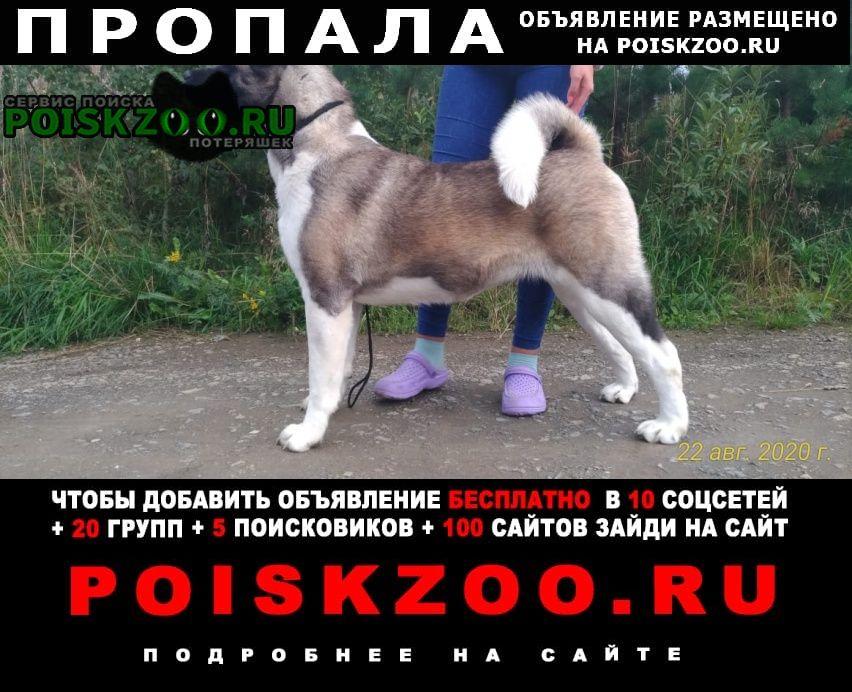 Екатеринбург Пропала собака.