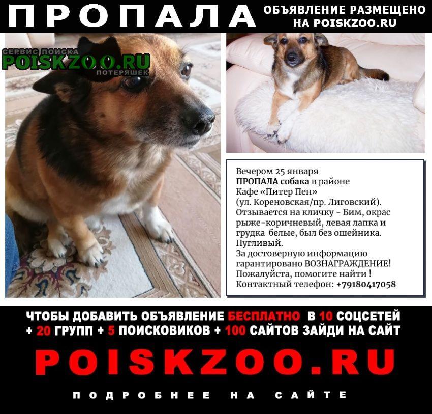 Пропала собака 25 января, вечером 20.00 Краснодар