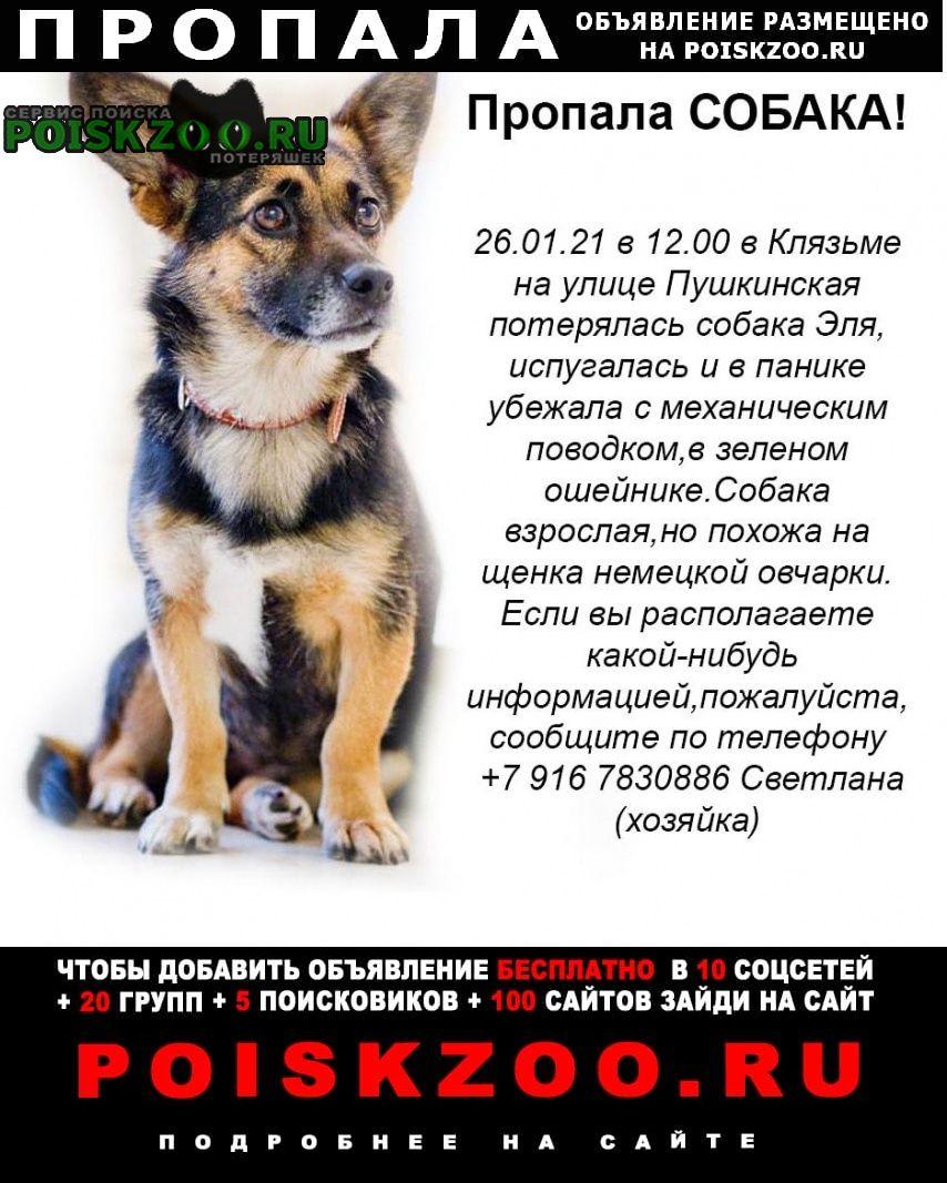 Пропала собака, Пушкино