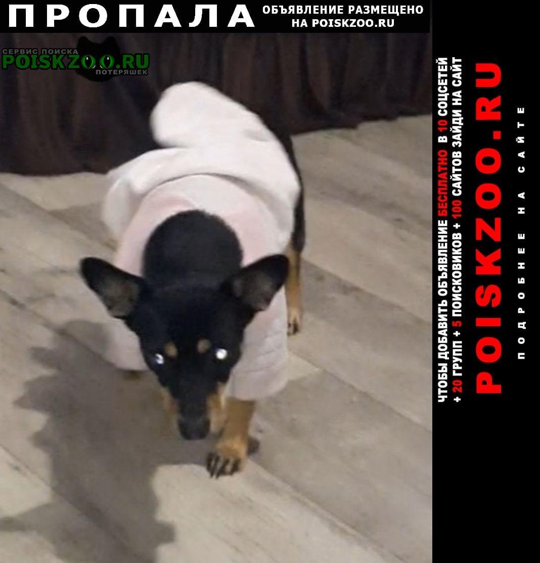 Пропала собака помогите пожалуйста Абакан Хакасия