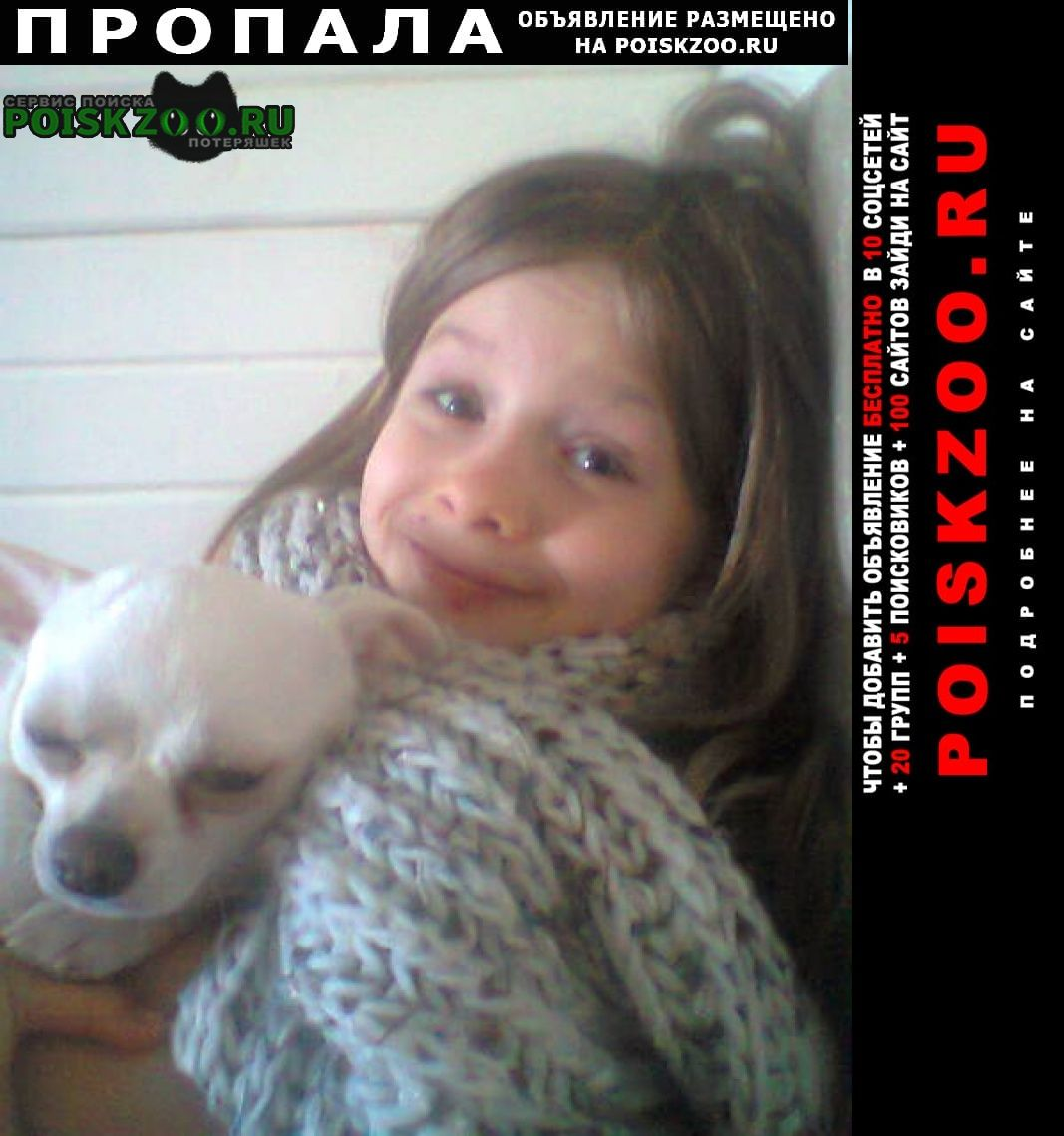 Москва Пропала собака белая чихуахуа