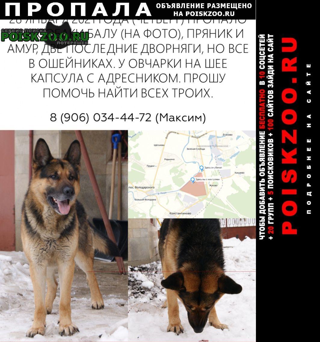 Пропала собака 3 собаки Жуковский