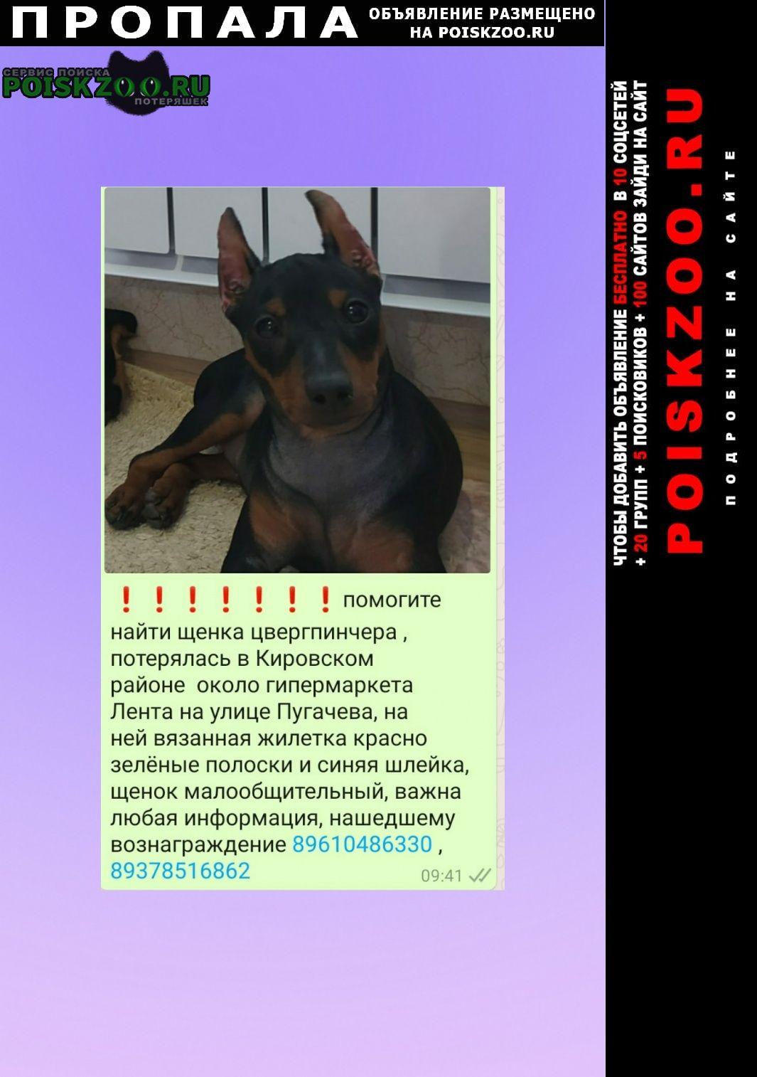 Пропала собака за вознаграждение Уфа