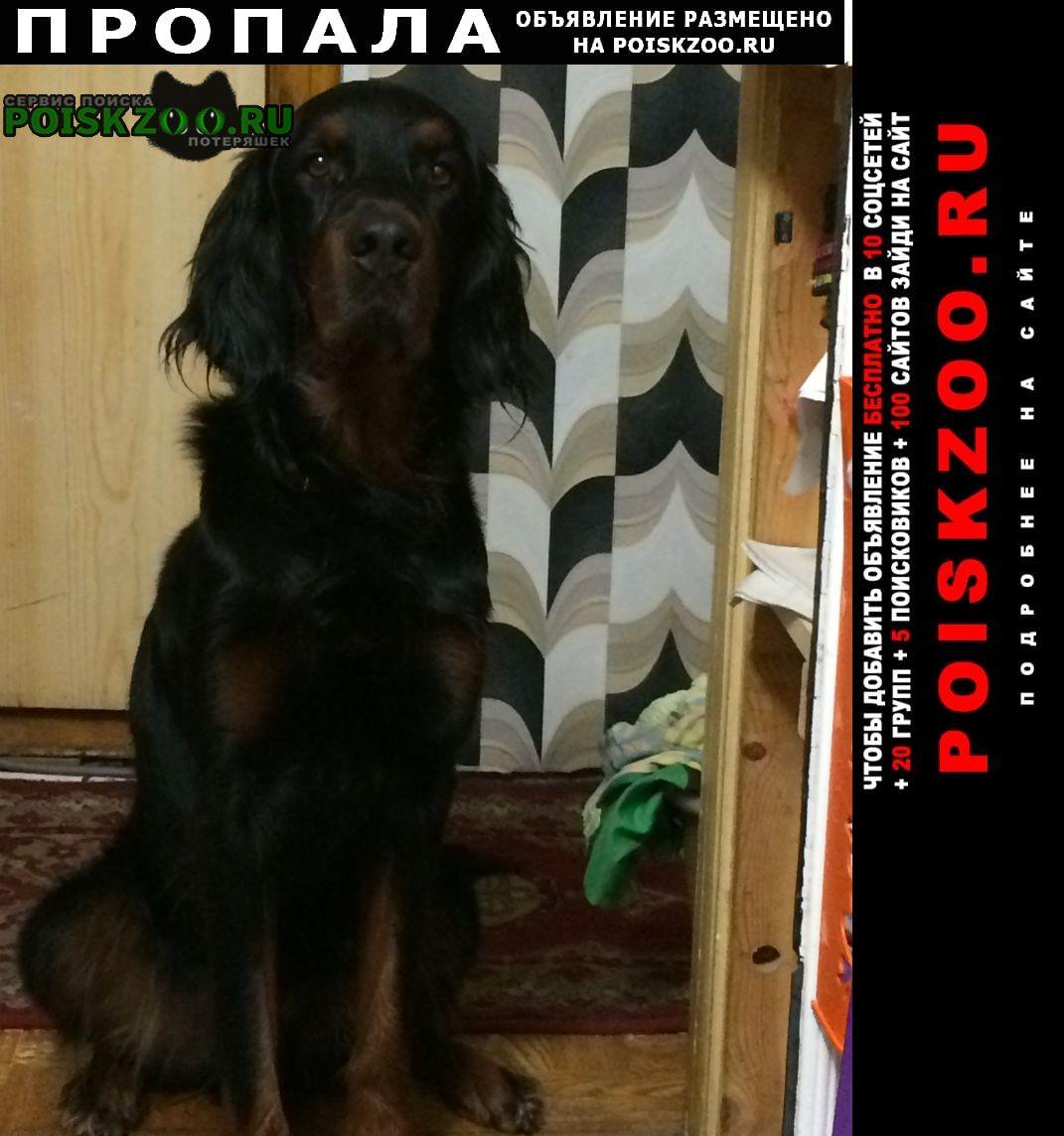 Ломоносов Пропала собака