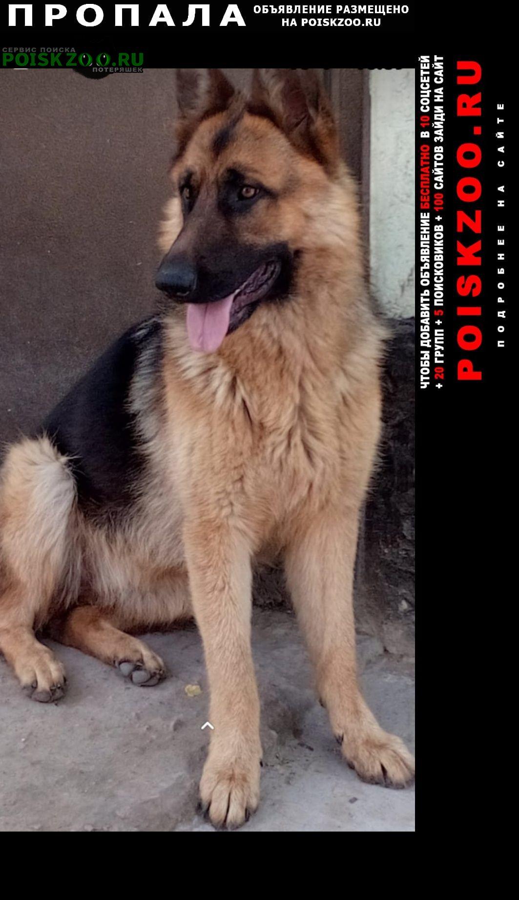 Пропала собака Шымкент (Чимкент)
