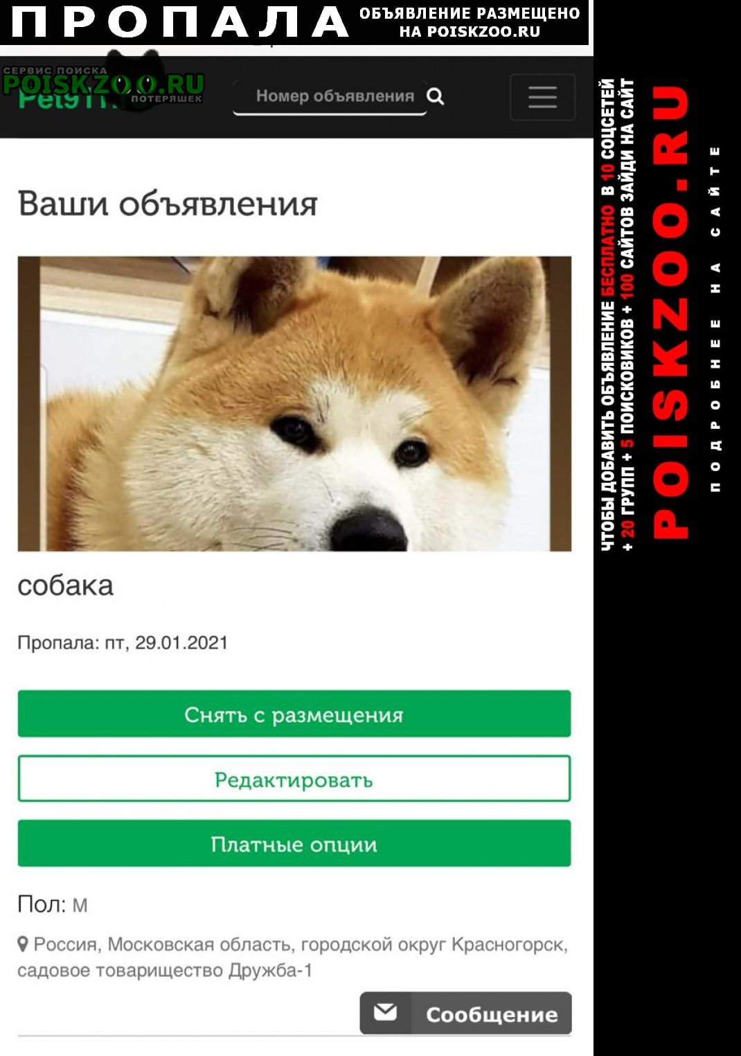 Красногорск Пропала собака кобель акита ину