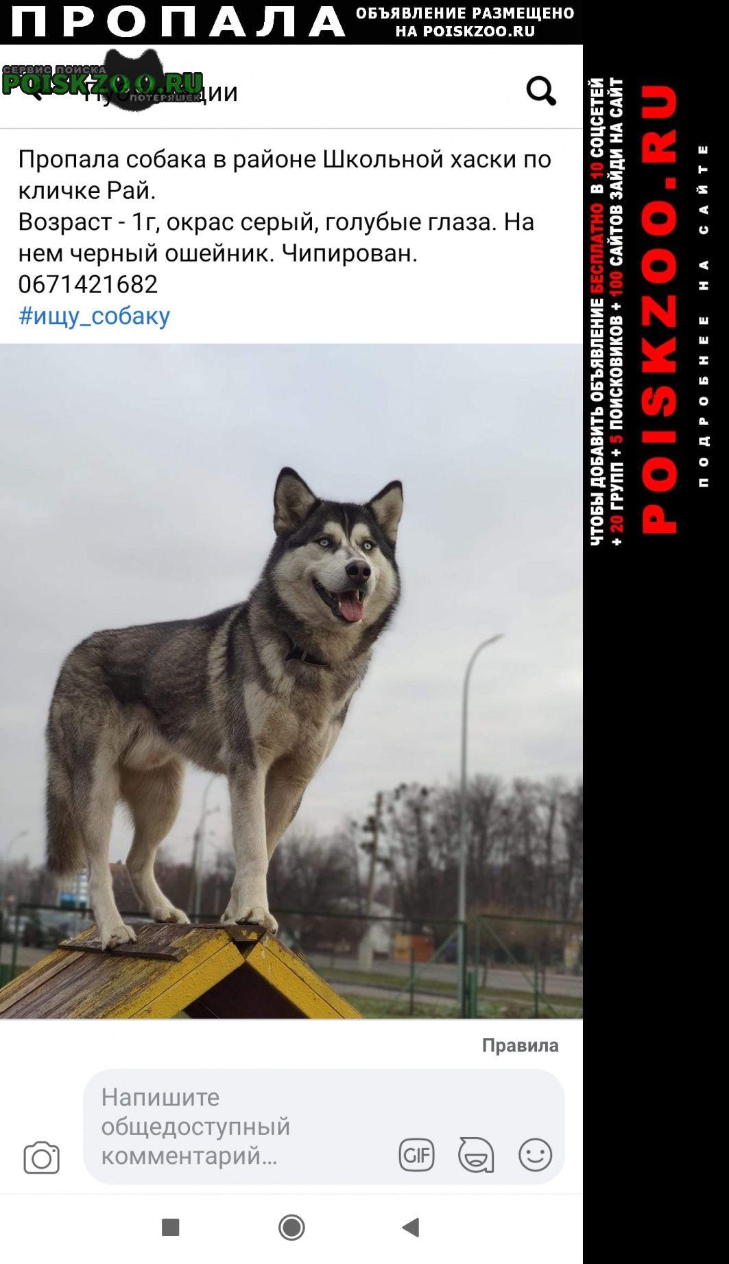 Пропала собака сегодня в 12 дня Черкассы