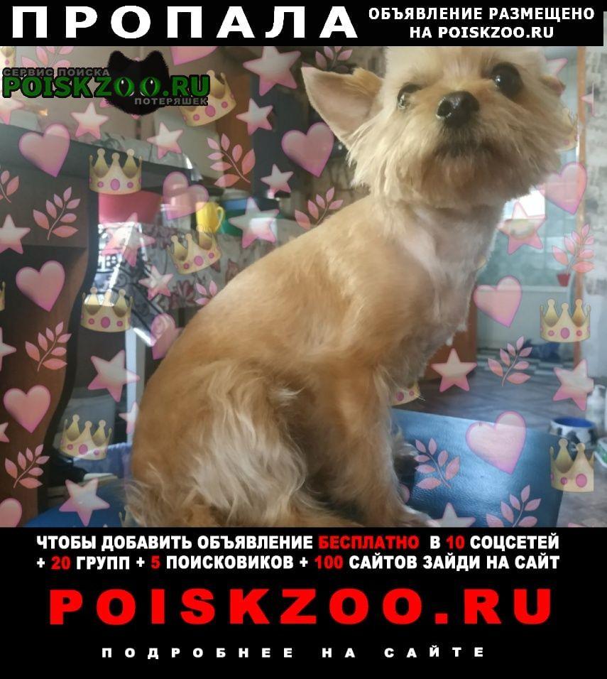 Пропала собака Луганск