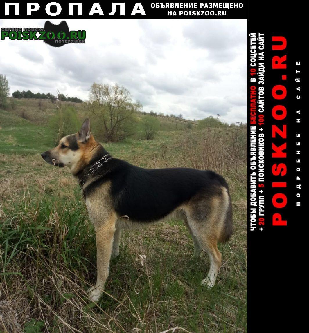 Пропала собака Пущино