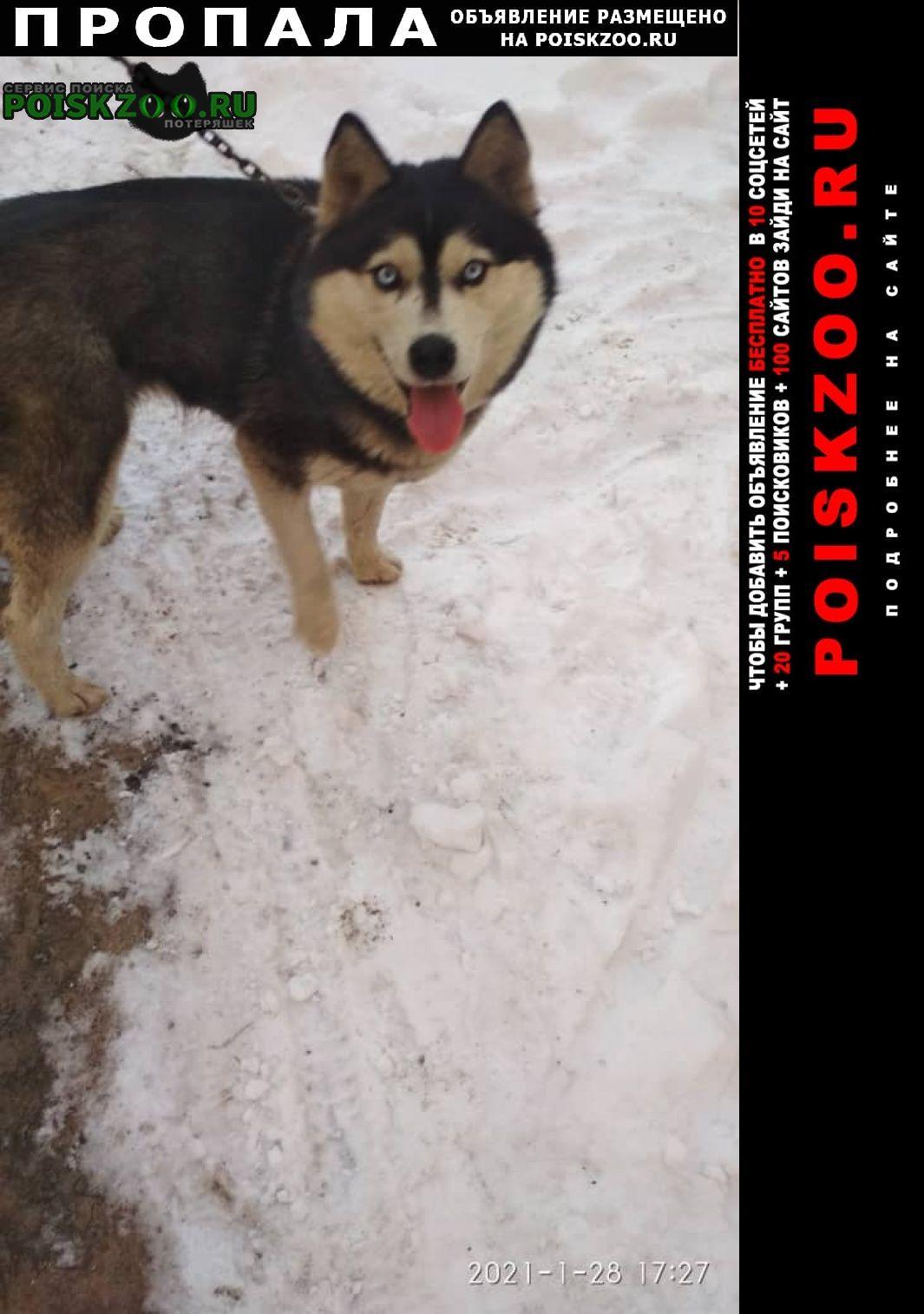 Пропала собака сибирский хаски Бишкек