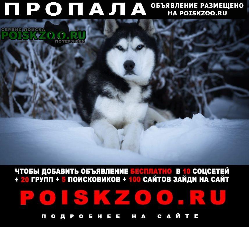 Азов Пропала собака