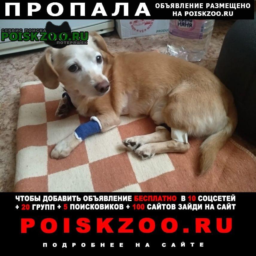 Пропала собака бибирево, алтуфьево Москва