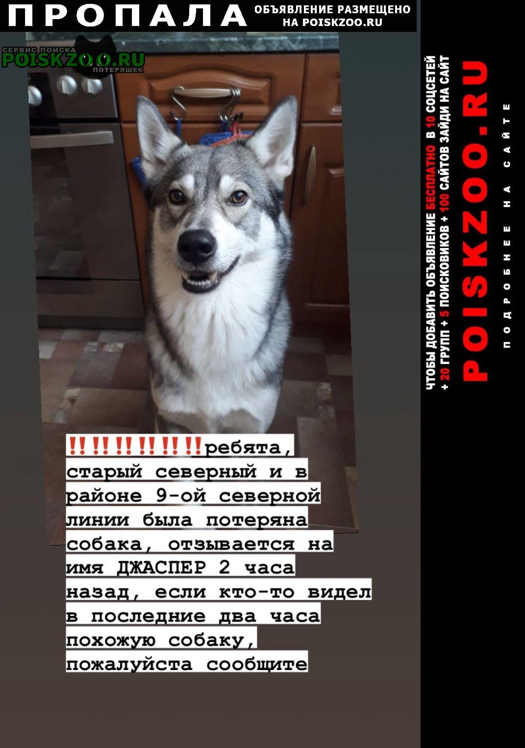 Москва Пропала собака свао, район северный