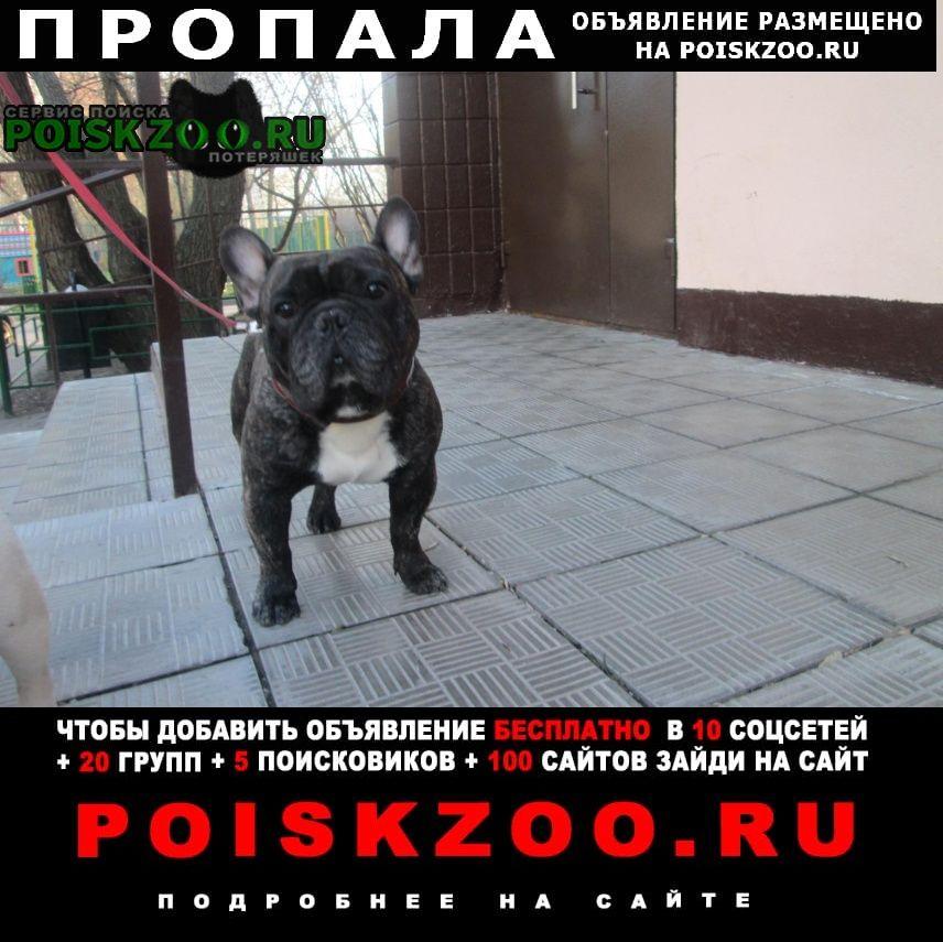 Чехов Пропала собака потеряшка.