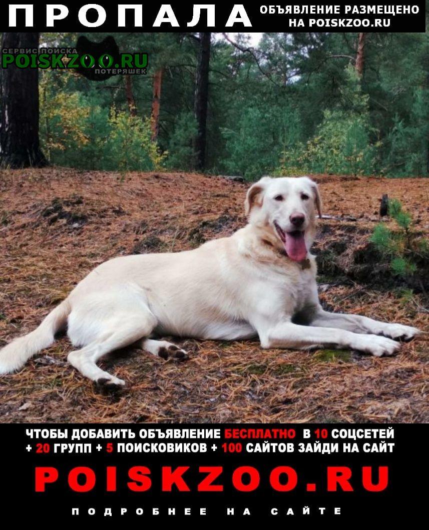 Пропала собака Ступино