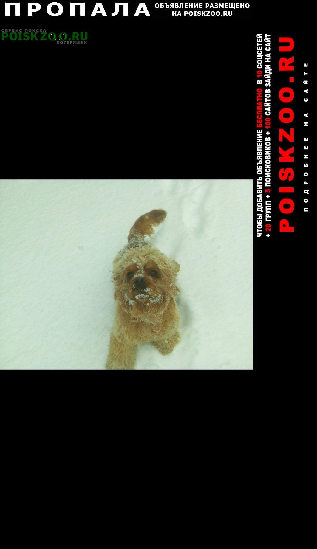 Пропала собака Ставрополь