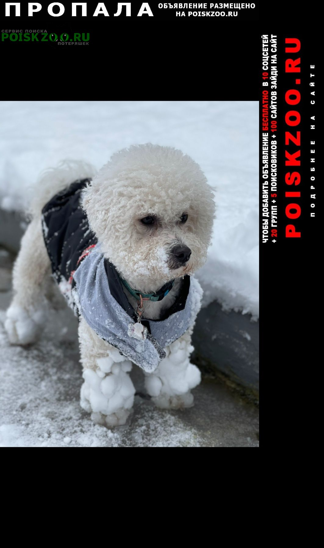 Алушта Пропала собака.