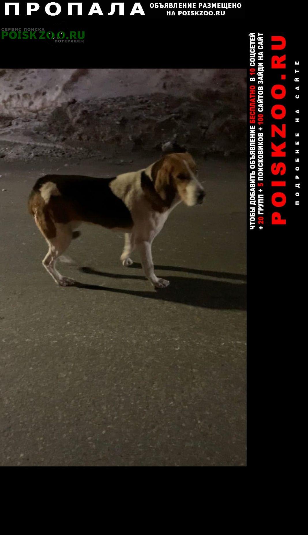 Пропала собака Миасс