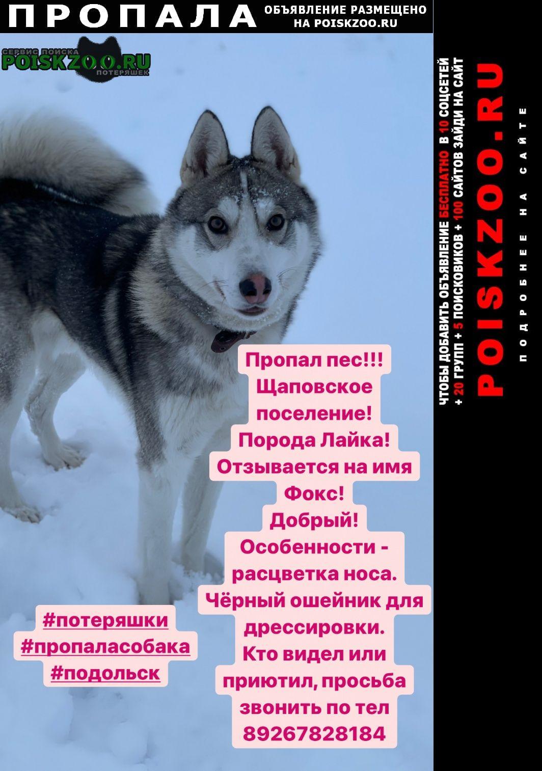 Подольск Пропала собака